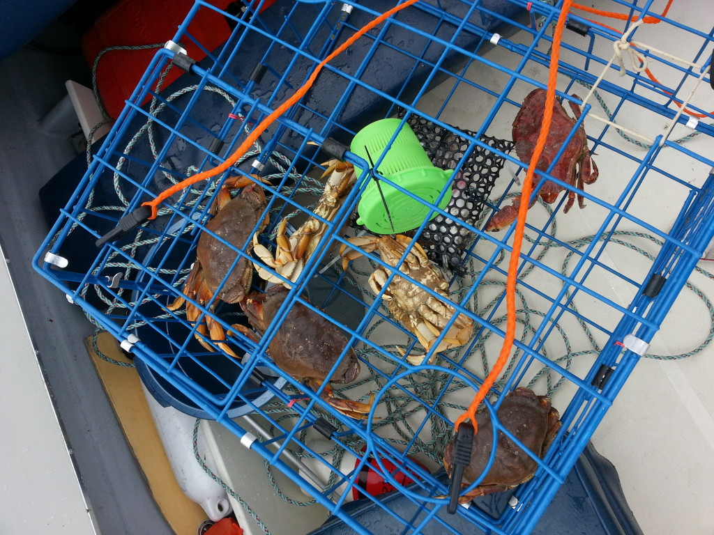crabs caught on rental boat